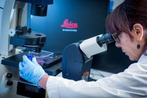 A woman in a lab coat and wearing gloves looks through a microscope.
